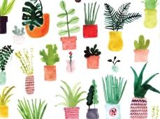 allie-newman_plants_desktop