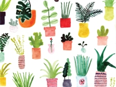 allie-newman_plants_desktop